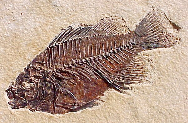 Fossile Dating-Methoden Wikipedia